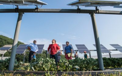 5 Strengths Of Being A Green Business
